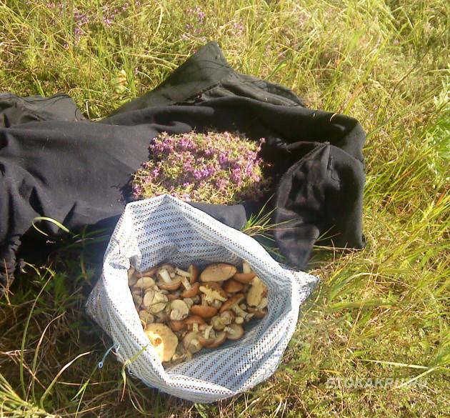 июньские грибы